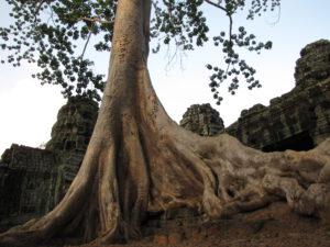 Ta Phrom Tempel/Ta Phrom temple